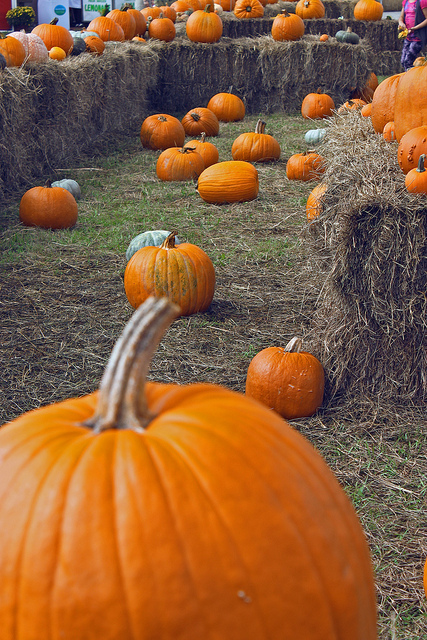Get In the Harvest Spirit With These Fall Events and Activities Near Union Wharf - blog post image