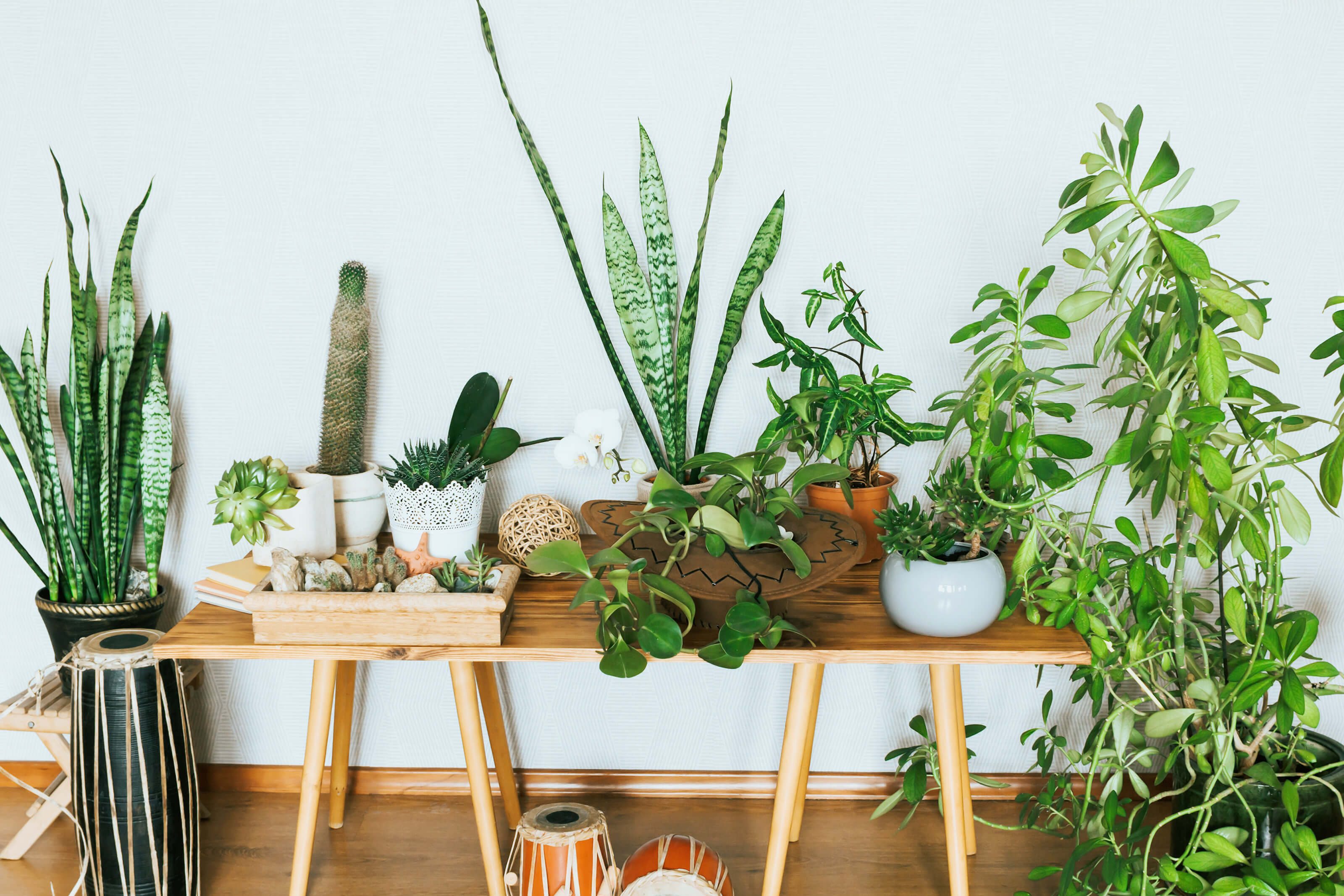 Add Some Green to Your Union Wharf Apartment Home this National Indoor Plant Week - blog post image